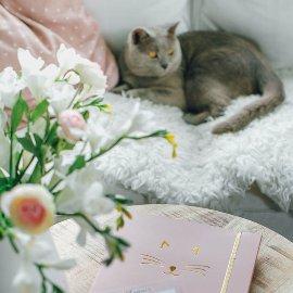 Sammelmappe A4 Katze Rosa Gold