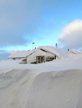 Schweden Husky Schnee Reisetipps Insider